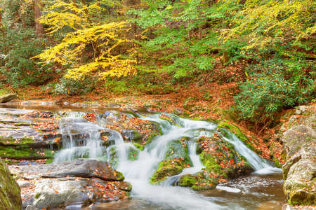 Roaring Fork Creek cascades through a lush forest and mossy boulders, Great Smoky Mountains National Park, Tennessee photo
