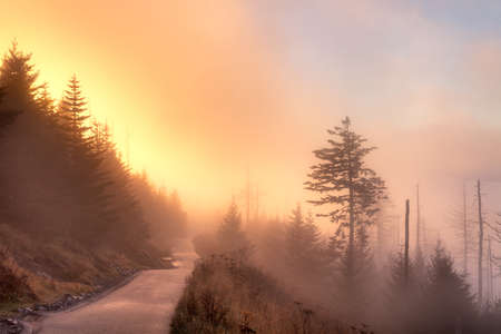 great smoky mountains national park: Foggy autumn sunrise from path leading to Clingmans Dome, Great Smoky Mountains National Park, Tennessee, USA