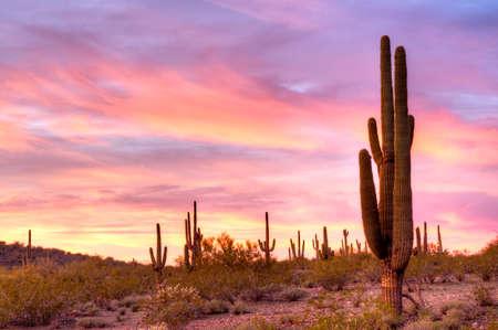 Saguaros vangen dagen laatste zonnestralen. Stockfoto