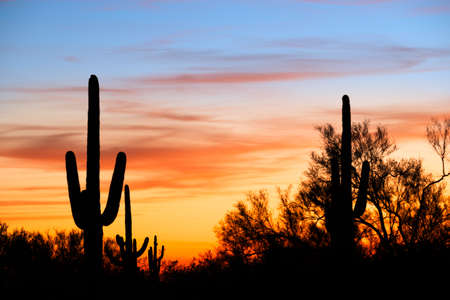 Saguaro silhouetten against red sky.