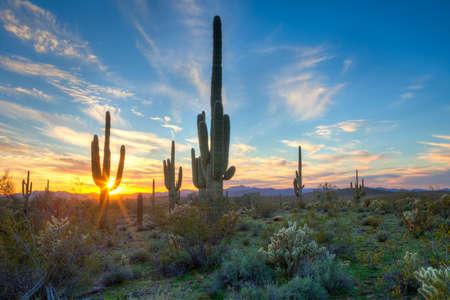 Zon ondergaat beetwen Saguaros in Sonora woestijn.
