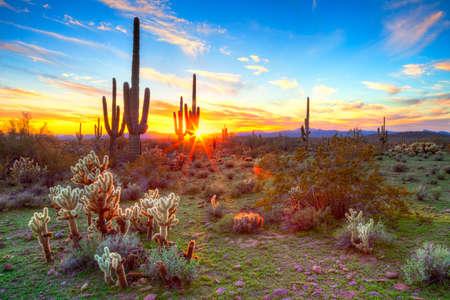 Zon ondergaat beetwen Saguaros in Sonora woestijn Stockfoto