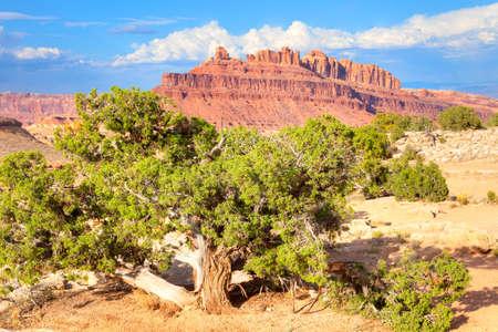 ironwood: Ironwood Tree at Black Dragon Canyon  Stock Photo