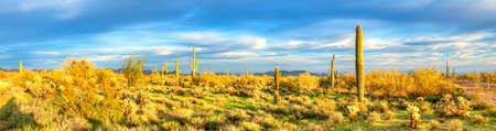 sonoran desert: Panorama of Sonoran Desert. Stock Photo