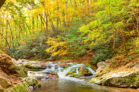 newfound gap: Roaring Pigeon River cascades through a lush forest and mossy boulders, Great Smoky Mountains National Park, Tennessee
