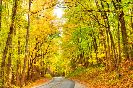 asheville: Road winding through the Great Smoky Mountains National Park.