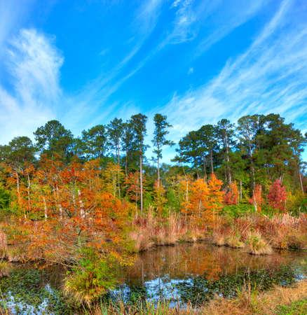 Mississippi moeras in de herfst langs de Natchez Trace Parkway. Stockfoto