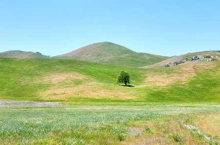 san joaquin valley: Blooming hills near Caliente, California.