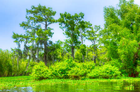 Swamp with Cypress Trees in Atchafalaya River Basin. photo