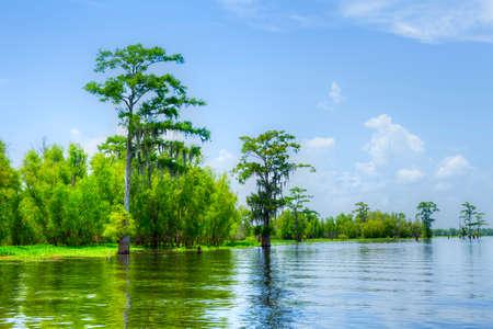 アチャファライア川でサイプレスの反射。