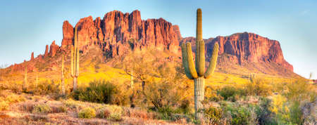 Sonoran Desert, Saguaros and Brittlebush catching day's last rays. Banco de Imagens - 33889870