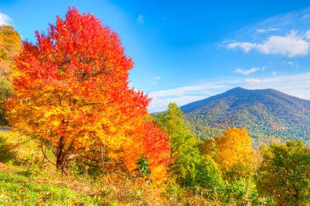 Autumn at Blue Ridge Parkway. Фото со стока