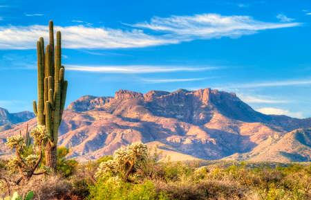 ソノラ砂漠の日最初の太陽をキャッチ光線します。