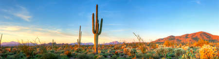 tonto national forest: Sonoran Desert catching days last rays.