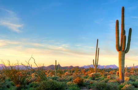 �sunset: Desierto de Sonora captura d�as �ltimos rayos.