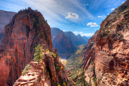 cottonwood tree: View of Zion Canyon from Angels Landing,in Zion National Park, Utah.