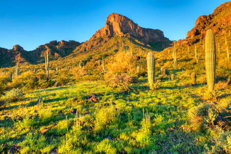 Picacho Peak at sunrise, surrounded by blooming desert.