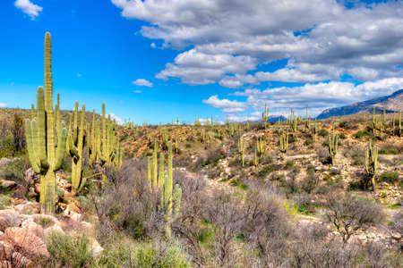 catalina: Catalina Mountain State Park near Tucson.