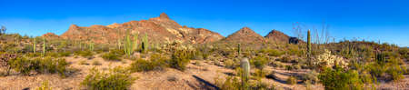 creosote: Panorama of Organ Pipe Cactus National Monument. Stock Photo