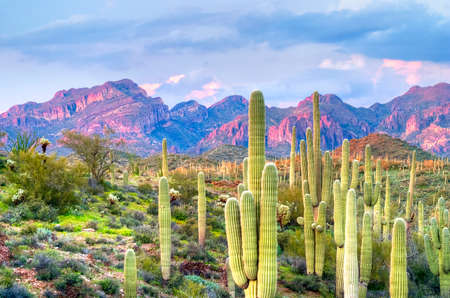 plantas del desierto: Puesta de sol encendió Butte en Hewitt Cañón, Arizona.