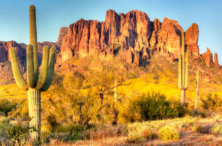 Blooming Brittlebush in Lost Dutchman State Park. Stock Photo