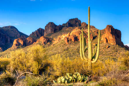 tonto national forest: Saguaros in Hewitt Canyon.