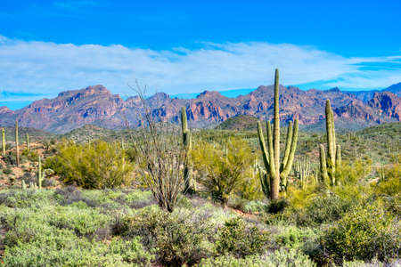 tonto national forest: Hewitt Canyon with Saguaros in Superstition Wilderness.