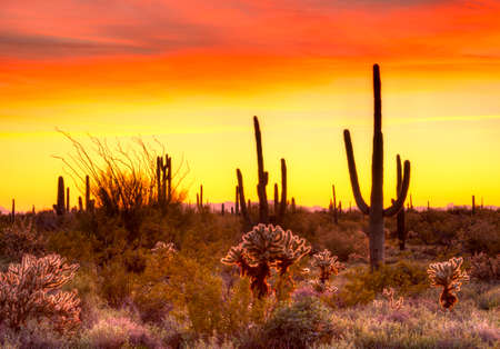 cholla cactus: Red sky over Sonoran Desert, at sunset.