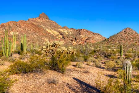 pipe organ: Organ Pipe Cactus National Monument. Stock Photo