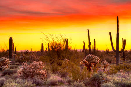 sonoran: Red sky over Sonoran Desert, at sunset.