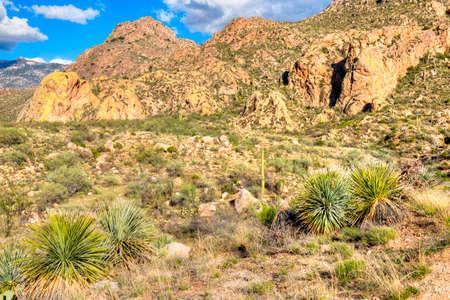 desert vegetation: Catalina Mountain State Park near Tucson.