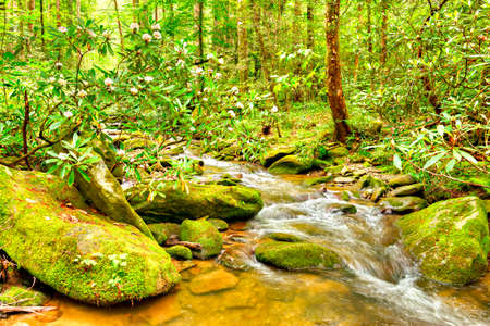 north cascade national park: Blooming Rhododendron and water cascades with boulders covered in green moss. Smoky Mountains National Park. Stock Photo