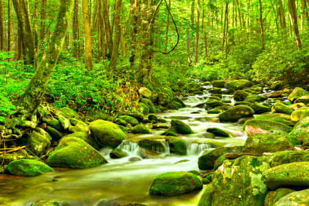 Water cascades over moss covered rocks, in Great Smoky National Park. Stock Photo