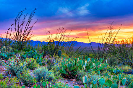 Sunset in Saguaro National Park near Tucson, Arizona. Stock Photo