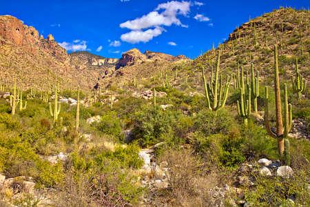 cholla: Finger Rock Canyon near Tucson.