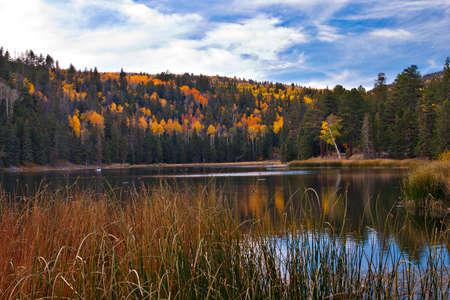 aspen tree: Possey Lake in Escalante National Monument, Utah.