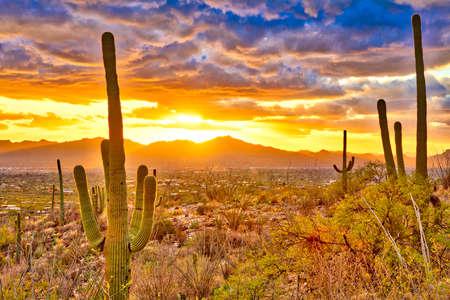 cholla: Sunset over suburb of Tucson.