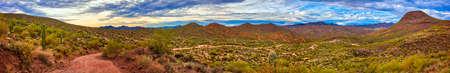 cholla: Panorama of Sonoran Desert near Phoenix, Arizona.