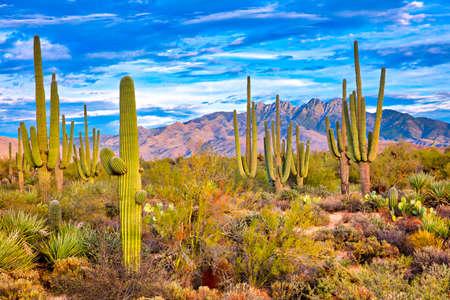 Saguaro et Four Peaks près de Phoenix, en Arizona. Banque d'images - 81076512
