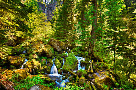 Watson River cascades through Umpqua Forest.