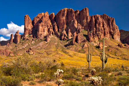 Saguaros and blooming Brittlebush in front of Superstition Mountains.