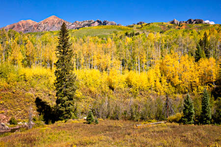 Aspens along Kebler Pass, in autumn. Colorado.
