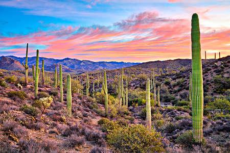Sunrise in Sonoran Desert near Phoenix, Arizona. Stock Photo