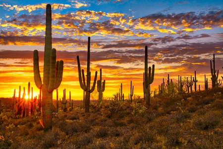 Sunset in Sonoran Desert, near Phoenix. Stock Photo