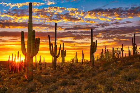 Sunset in Sonoran Desert, near Phoenix. Stockfoto