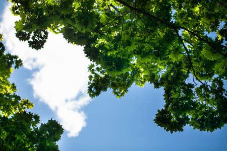 Green foliage on the blue sky
