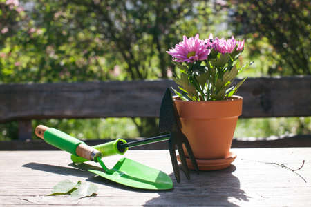 Close up of Gardening tools on the wooden table. Village view. Landscape. Still life. Flower in a pot and watering can.