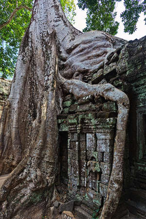 Slowly covering by rainforest ruins of Angkor, Cambodia