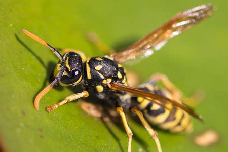 background: wasp