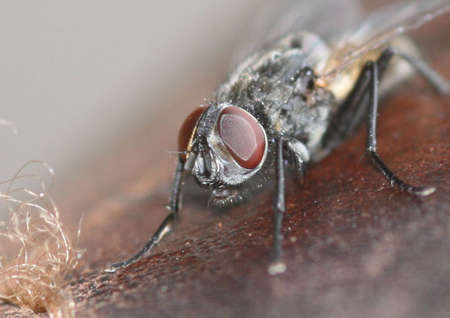 portrait of a housefly Zdjęcie Seryjne